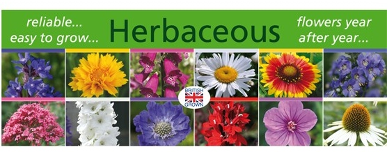 Herbaceous_banner